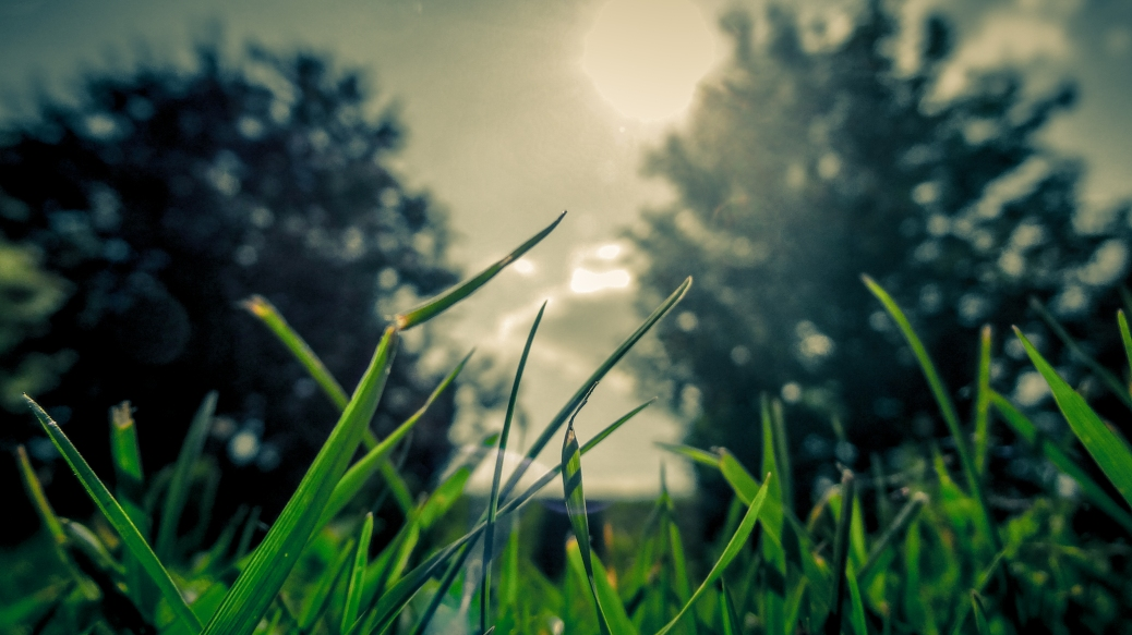 vectorbeastcom-grass-sun